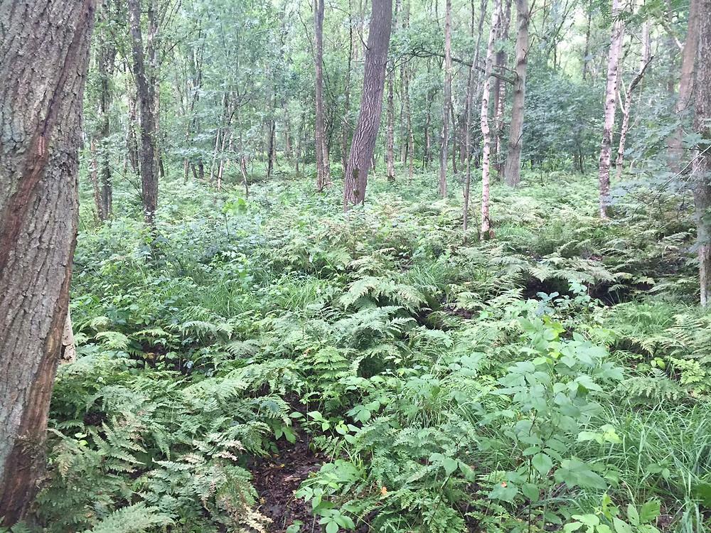 Horster Moor in dem Ernst Otto Karl Grassmé lebte