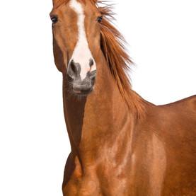 7. Glückstädter Pferde-Fest