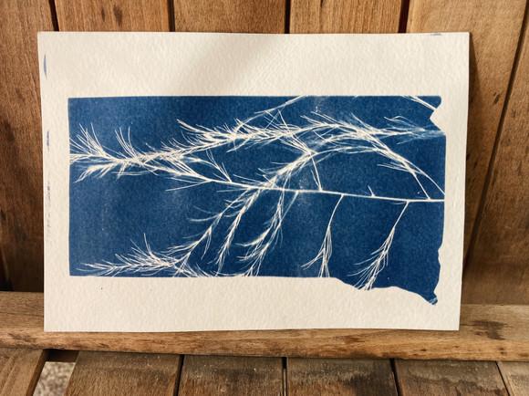 Windy - South Dakota Cyanotype
