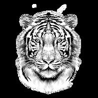 77441024-cabeza-de-tigre-de-cara-complet