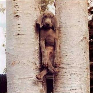 A dog is stuck in a tree.