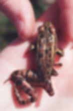 20frog0913.jpg