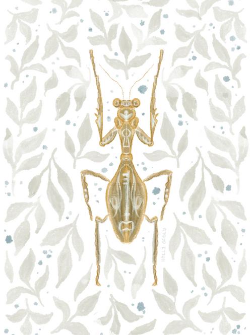 Praying Mantis 5x7 Print (No Frame Included)