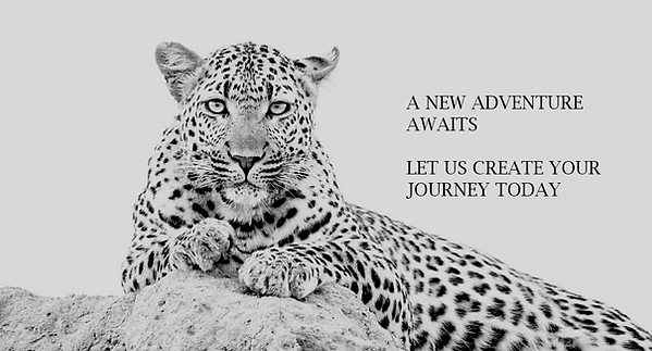 Leopard  black and white.tif