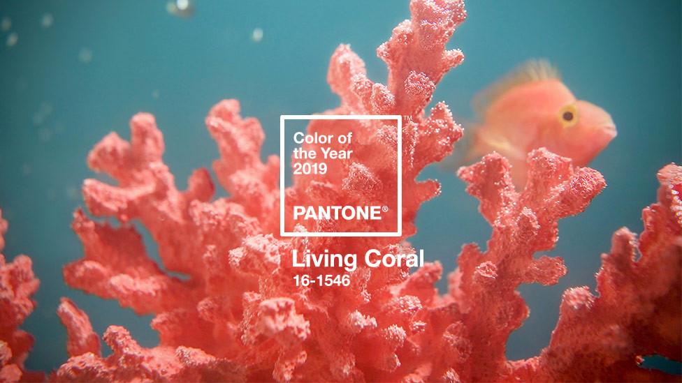 Pantone Living Coral.