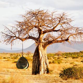 Benchmark_Nest-Africa-Scene-2048x1229.jp