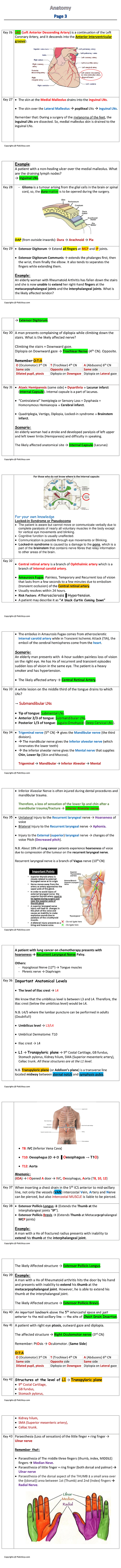 Anat3 1page-1.png