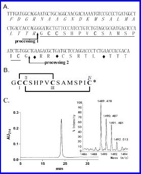α‑Conotoxin TxID from Conus textile