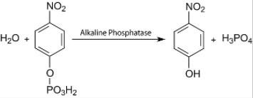 Looking for SIGMAFAST™ p-Nitrophenyl phosphate Tablets N2770