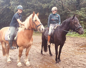Nye_heste.jpg