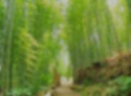 竹林 ぱくたそ_edited.jpg