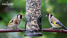 VFAS Backyard Bird Feeder Class