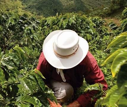 Colombian_farmer_edited.jpg