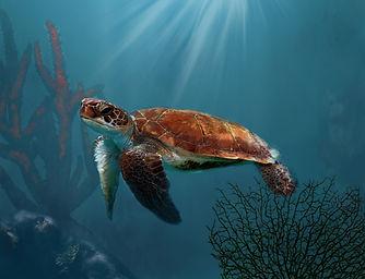 Turtle Life.jpg