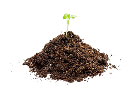 young-green-seedling-growing-in-a-soil.p