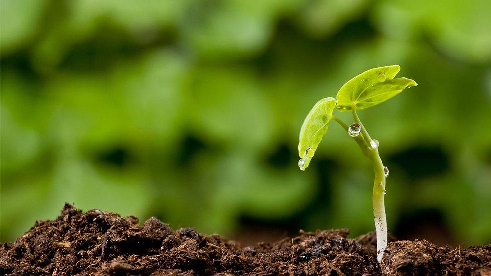 Из чего можно и из чего нежелательно готовить рассадный грунт и субстрат?
