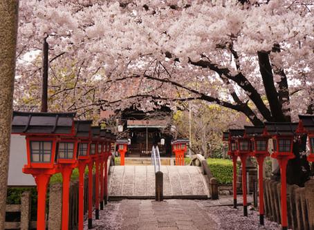 We only recommend the best - SAKURA・スタッフのイチオシ桜スポット Part.1