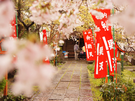 We only recommend the best - SAKURA・スタッフのイチオシ桜スポット Part.2