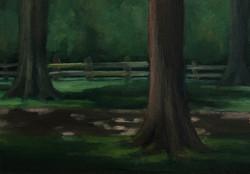"""Rowan Oak #3"""