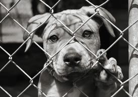 Maltrattamento di animali: rilevano anche i meri patimenti