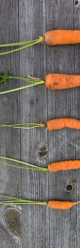 carrots lined up with stalks - food - rh