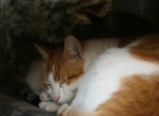 Sleep:  The Missing Key