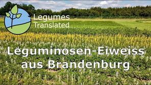 'Legume protein from Brandenburg' video published