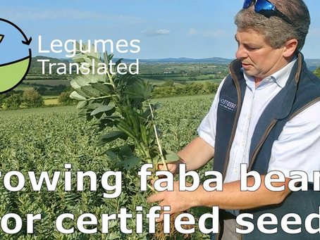 'Growing faba beans for certified seed' video published