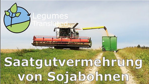 'Production of soybean seeds' video published