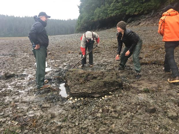 The CRRC VISTA outplants clams in Seldovia, Alaska.