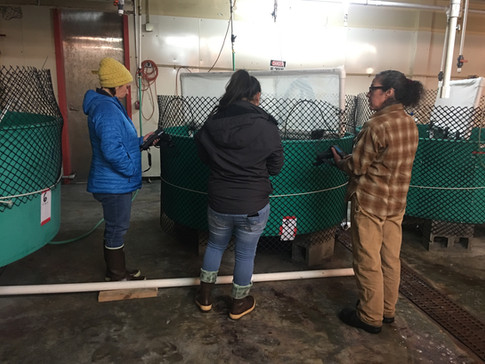 Chugach Regional Resource Commission holds a water quality training where participants from partner villaged learn how to use proper equipment and learn proper sampling techniques.