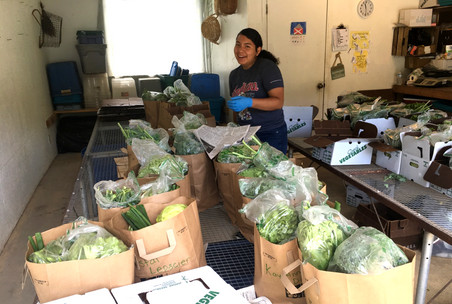 Staff at the College of Menominee Nation prepare the 30 subsidized CSA shares for the successful pilot CSA program they launched in partnership with a local farm.