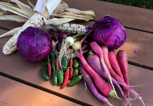 A handful of our produce collected from the College of Menominee Nation community garden in September.