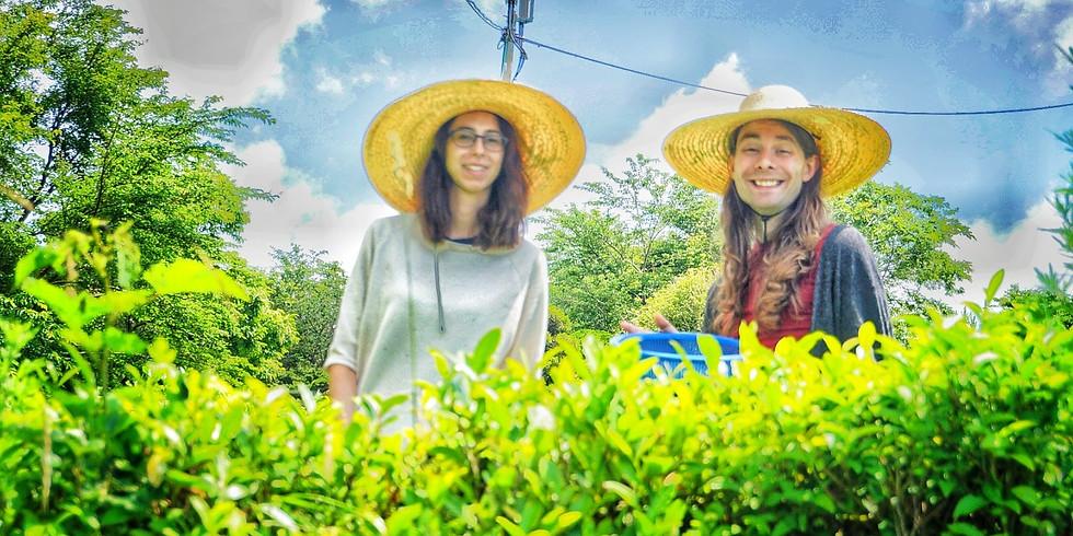 Korean Green Tea, Temple Tour & Meditation Experience