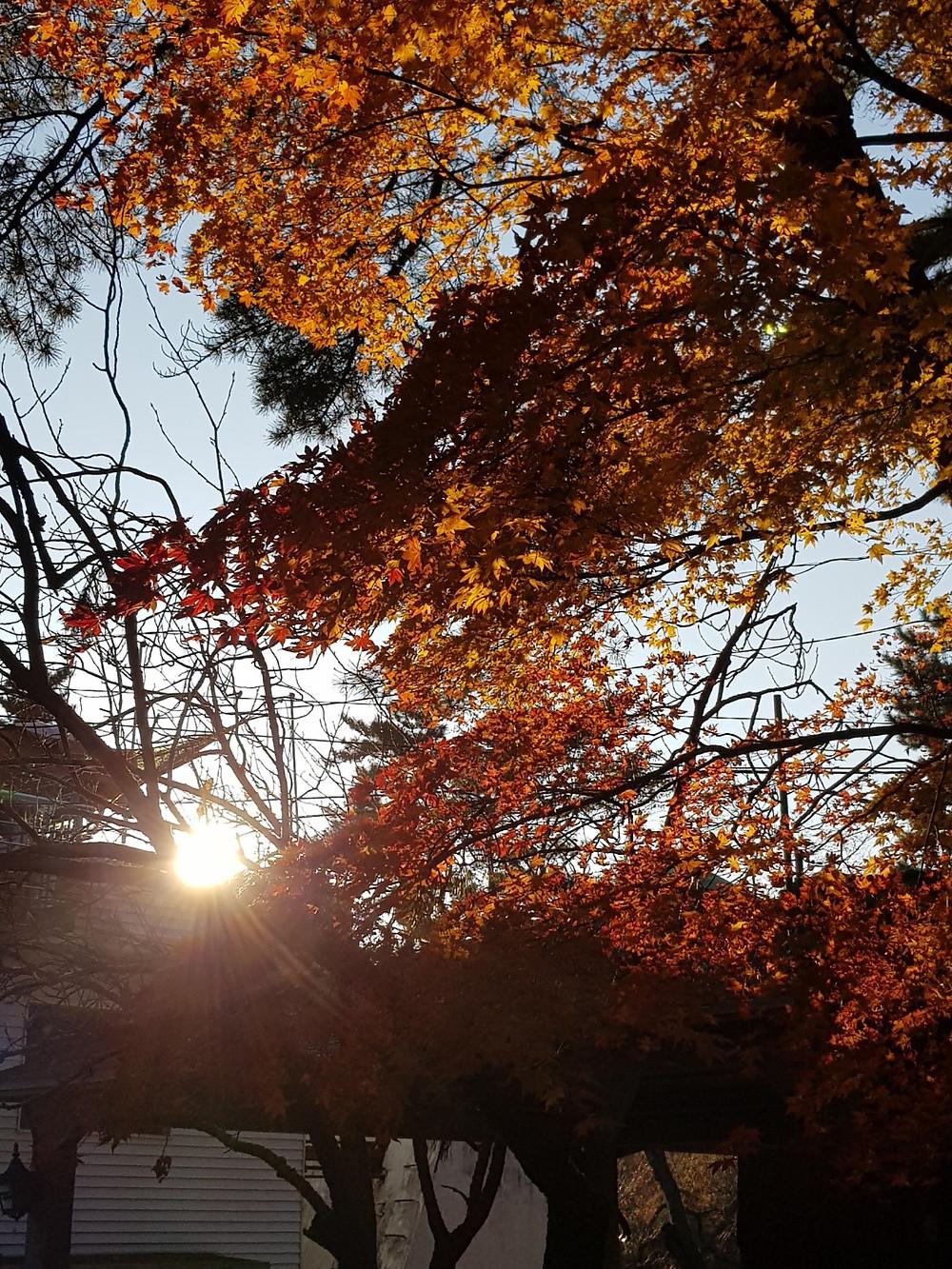 KakaoTalk_Photo_2018-11-04-20-45-21