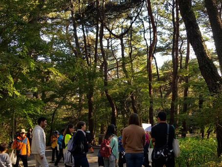 Healing and History – A Forest Tour Program in Geumgang Park