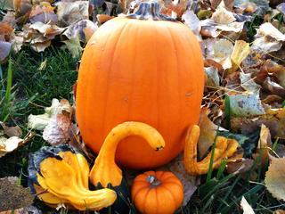 Pumpkins With Our Pumpkin