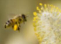 דבורים 7.jpg