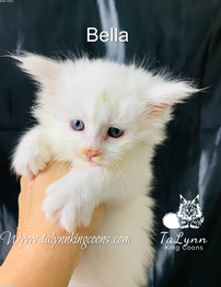 Bella.png