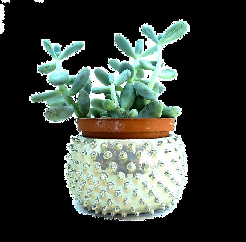 Pot à Cactus avec Cacatus
