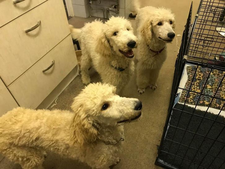all three pups.jpg