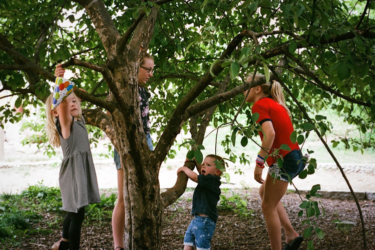 Kids on tree Pentecost.JPG