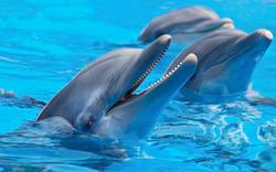 delfinnarizdebotella