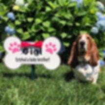 dogbonewebsite.jpg