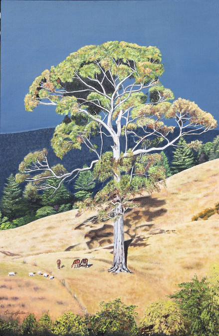 'Pats Blue Gum Tree'