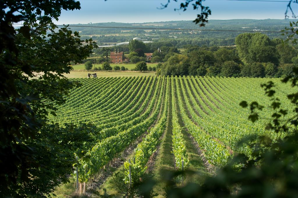 Wine garden of England