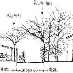 樹木のある庭