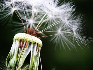 Mindfulness i Påsken - Finn roen og møt våren med ny energi!