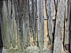 Bois abimé à cause des termites
