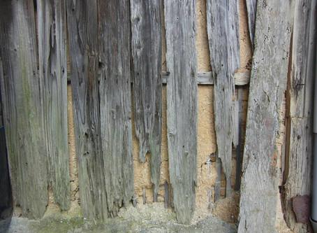 Termites - Small but Dangerous